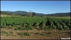 campi toscani (imma.brunetti) Tags: campo terra piante verde toscana coltivare alberi cielo colline scarlino riserva grosseto maremma piandalma stradaprovincialecolicchie