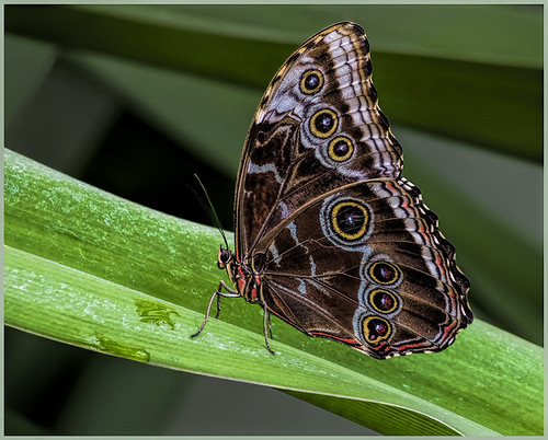 Resting Butterfly - by Marcia Nye
