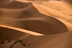 L'erg Chebbi (3) (mgirard011) Tags: afrique ergchebbima lieux maroc randonnées meknèstafilalet ma 300faves