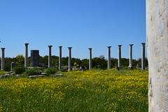 DSC_0265 (mark.greefhorst) Tags: cyprus northerncyprus salamis ancientworld roman