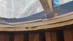20170328_143129.jpg (errantember) Tags: bugs carpentry engineering leatherman measurement mosquitos roofring screen tapemeasure yurt