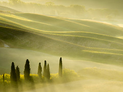 Trees and Deer (Steve_Mallett) Tags: morning tuscany landscape travel mist cypresses sunrise deer sanquirico