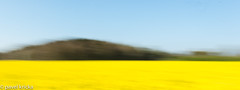 PPF_0778-4 (pavelkricka) Tags: holbrook fields village oilseed rape motion blur deliberate intentionalcameramovement icm