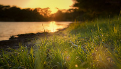Sunset by the Grass (JDS Fine Art Photography) Tags: landscape colors bokeh depthoffield lake water sunset golden light illumination warmlight sun inspirational nature beauty naturesbeauty green grass orange pink colours