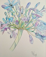 agapanthus (hunt1942) Tags: watercolour watercolor agapanthus flower