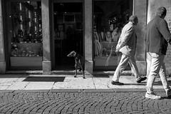 opposite directions (miriam.lonardi) Tags: dog people walking opposite direction verona veronacentro corsosantanastasia sguardi streetphotography street blackandwhite biancoenero streetphotographybw bw vetrata fujifilm fujifilmxt10 fujinonxc1650mm fujinon fujifilmphotography fujifilmstreetphotography