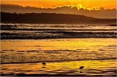 2 Gulls - Cloudy Beaches (Trains In Tasmania) Tags: australia tasmania cloudybay cloudybeaches sunset latelighting beach golden brunyisland southbrunynationalpark waves clouds sea seagull gull trainsintasmania ef35350mm13556lusm canoneos550d stevebromley seascape