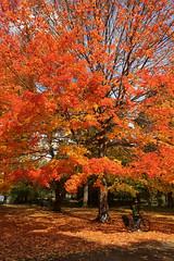 New York - Prospect Park