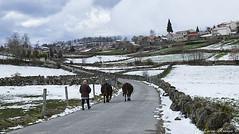 Regresso à aldeia (marialuísaaraújo) Tags: lamasdeolo regresso aldeia serradoalvão
