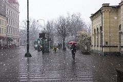 L1004293_v1 (Sigfrid Lundberg) Tags: lund plants people umbrellas lundc sweden skåne busstop busshelter bangatan woman snowfall leica aposummicronm 50mmf20asph magnoliastellata