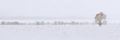 IMG_6127B Tree (cmsheehyjr) Tags: cmsheehy colemansheehy scenery landscape nature antelopeflats jacksonhole grandtetonnationalpark wyoming snow