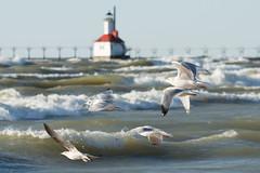2017 0308 St. Joe Pier-58 (greenshots32) Tags: mckenziehassle michellehassle nature silverbeach snowandice tiscorniabeach tiscorniapier beach bigwaves seagulls sunset winter