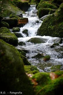 Bach / Creek