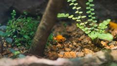 円山動物園 13 (tomomega) Tags: 札幌 円山動物園 北海道 動物園 zoo 動物 animal 蛙 frog