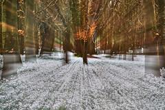 Welford Snowdrops (paulinuk99999 - tripods are for wimps :)) Tags: paulinuk99999 welford snowdrops berkshire spring 2017 sal135f18za