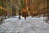 Welford Snowdrops (paulinuk99999 (lback to photography at last!)) Tags: paulinuk99999 welford snowdrops berkshire spring 2017 sal135f18za
