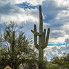 Saguaro (Ken Mickel) Tags: arizona cacti cactus clouds cloudy desert estrellla goodyeararizona landscape landscapedesert outdoors plants saguaro topaz topazadjust weather nature photography