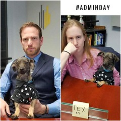 It's Administrative Professional's Day today so we thought we'd wish Tex a wonderful day. We're proud of him for all he's accomplished. 🐶👔 #appreciative #therealboss #woof #adminday #hr #olninc #carsonca (oln_inc) Tags: oln inc carson ca los angeles
