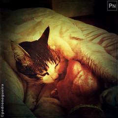 Caress (Pedro Nogueira Photography) Tags: pedronogueiraphotography pedronogueira photography animal cat gato doméstico domestic kitty kittens pets pet mobilephone iphone5 telemóvel iphoneography patuska