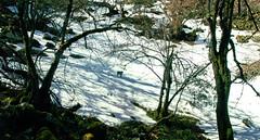 (Stoned Squirrel) Tags: nieve snow peñamayor bosque forest asturies xixon asturias gijón lola perro dog nature