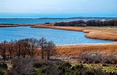 Coastal Wetland (bjorbrei) Tags: sea water coast shore pond lake reeds reed viker skipstadkilen asmaløy hvaler norway brattestø skipstad