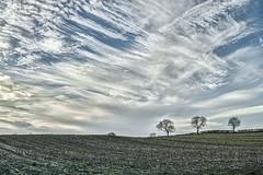A Simple Landscape (jamesromanl17) Tags: trees field sky landscape clouds cloudscape cloudy tree simple england landscapes x3 fields countryside cloud farm skies sigma farming britain cheshire farmland 30mm foveon dp2 merrill