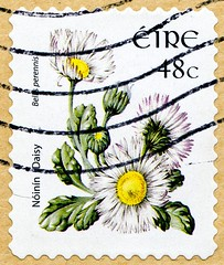 great stamp Eire Ireland 48c common daisy (Bellis perennis, chiribita, Gänseblümchen, Μαργαρίτα, Pâquerette, Pratolina comune, 雛菊, Маргари́тка многоле́тняя, százszorszép, Tratinčica, Madeliefje, Tusindfryd) timbre selo แสตมป์ ไอร์แลนด์ stampa Eire марки (stampolina, thx for sending stamps! :)) Tags: stamps stamp postzegel zegels postzegels timbre timbres postes postage briefmarken briefmarke sello sellos selos selo bolli bollo francobolli francobollo طوابع 邮票 razítka markica frimærker postimerkkejä γραμματόσημα בולים टिकटों bélyegek スタンプ 우표 antspaudai frimerker znaczki znamk pulları แสตมป์ markas blume fleur flower gelb yellow plant pflanze daisy commondaisy gänseblümchen százszorszép tratinčica madeliefje tusindfryd 雛菊 pratolinacomune pâquerette μαργαρίτα chiribita bellisperennis маргари́ткамноголе́тняя eire irland ireland irlandia आयरलैंड 아일랜드 irlanda írország