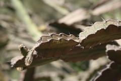 Colomos Forest photos (Mister Molacho) Tags: macrophotography macro canon 70300 sigmalenses méxico mrmolacho