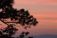 Pink Silhouette (gleavesm) Tags: blueridgeparkway virginia sunset