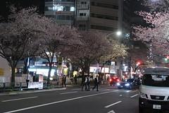 IMG_0537 (digitalbear) Tags: canon powershot g9x markii mark2 nakano dori sakura cherry blossom blooming fullbloom tokyo japan yozakura hanami