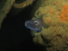Kyarra April17_1 (MatYts) Tags: kyarra ship wreck wreckage conger eel scuba diving bsac canon g15 fish eye