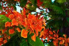 JARDINES DE MEXICO (fco_galan34) Tags: jardines mexico naturaleza natural morelos paisajismo ecosistemas flores colores plantas arboles jabachines