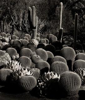 Cactus  Forms