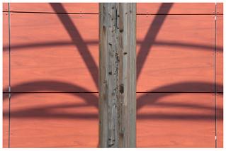 Palmier de bois et d'ombre
