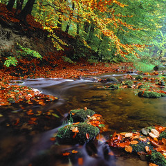 Rövarekulan - Velvia 100 exp* (magnus.joensson) Tags: sweden swedish skåne rövarekulan autumn october nature stream hasselblad 500cm zeiss distagon 50mm fle cf fuji velvia 100 exp exp2007 e6 polarizer