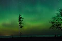Northern_lights_2 (divyatinnanuri) Tags: northern lights aurora dark sky stars dancing tree silhoutte dawn april spring stunning amazing upper peninsula michigan 2017 calumet