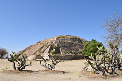 Cactuses in front of a ruined temple at Monte Alban (nickdippie) Tags: mexico oaxaca montealban zapotecruins zapotec ancientruins centralamerica mountaintown mountain mountainruins