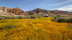 Wildflowers at Red Rock Canyon (Jeffrey Sullivan) Tags: bogfoot 25c94 solar torklift happijac truck camper ford f350 4x4 4wd off grid sullivanall rights reservedapril red rock canyon state park ridgecrest mojave desert easternsierra photomatixpro v6 beta hdr photomatix