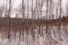 on the howker ridge trail (jtr27) Tags: dsc03830fr01 jtr27 sony alpha nex7 nex emount mirrorless sigma 19mm f28 exdn wideangle landscape winter hike hiking howkerridge trail randolph newhampshire nh newengland randolpheast whitemountains