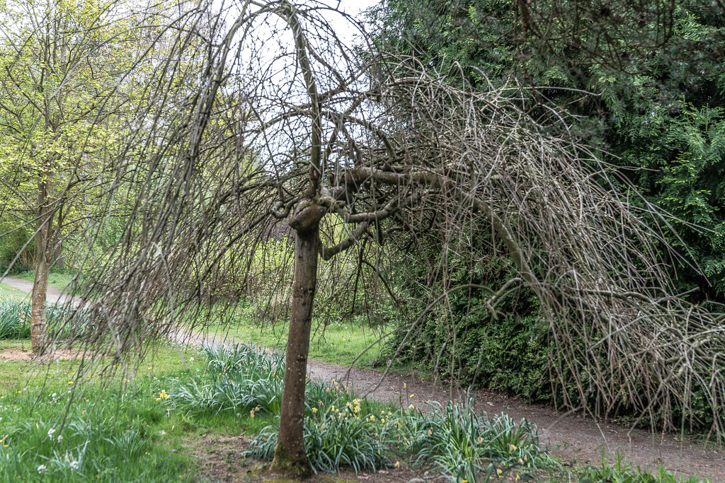 FARMLEIGH HOUSE [ GROUNDS AND GARDENS PHOTOGRAPHED APRIL 2017]-127238