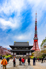 Tokyo Tower and Zojoji Temple : 東京タワーと増上寺 (Dakiny) Tags: 2017 spring april japan tokyo minato minatoward park garden shibapark city street outdoor landscape architecture japanesearchitecture tower temple blue sky nikon d7000 sigma 1770mm f284 dc os hsm sigma1770mmf284dcmacrooshsm nikonclubit