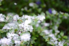 Aprill, aprill ... (anuwintschalek) Tags: nikond7000 d7k 18140vr austria wienerneustadt niederösterreich kodu home kevad spring april frühling lumi lörts schnee 2017