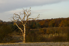 Crooked Landscape (Anxious Silence) Tags: chilt thechilternhills thechilterns rotherfieldgreys winter tree treeline nature barebranches outdoor rural countryside forest