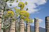 Springtime in Delphi / Proljeće u Delfima (Vjekoslav1) Tags: apollo temple hram apolon delphi delfi greece grčka proljeće cvijet flower spring europa europe ancient drevni svetište sanctuary ελλαδα