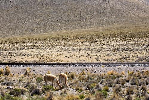 Peru_BasvanOortHR-93