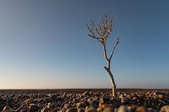 Desolation (Nick Seaman Photos) Tags: shinglestreet sand shingle gravel desert suffolk visitsuffolk sony a7rii zeiss coast beach coastal sky skies blue