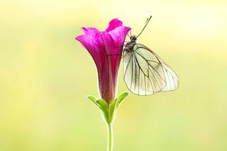 Nectar of life...