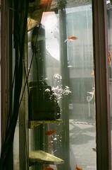 OLYMPUS 35 SP × FUJIFILM SUPERIA PREMIUM 400 (oi (oichanahcio)) Tags: olympus 35sp fujifilm superiapremium400 35mm film filmisnotdead filmcamera filmphotography filmforever filmshooters ishootfilm ilovefilm istillshootfilm analog nofilter noedit believeinfilm keepfilmalive travelingalone oijapantour nara japan olympus35sp zuiko oldlens