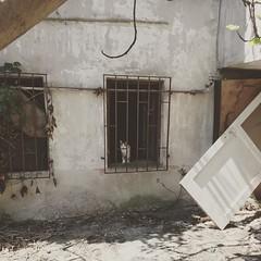 You talkin' me... #cat #catsofinstagram #cats #oldhouse #derelict #kedi #eskiev #lights #out #mag (lightsoutmag) Tags: instagramapp square squareformat iphoneography uploaded:by=instagram reyes