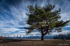 Convergence (Pierrotg2g) Tags: paysage landscape nature mountain montagne alpes alps alpi dauphiné chartreuse pnr isère nikon d90 tokina 1228 nuages clouds ciel arbre tree sky